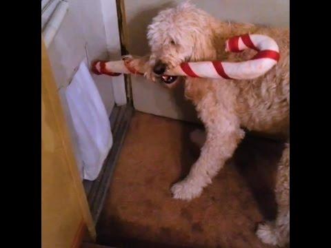 il-cane-e-il-bastoncino-natalizio