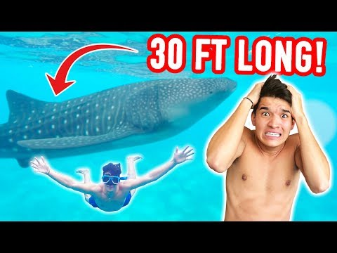 Swam In The Ocean w/ 30 FT LONG FISH! *SCARY*