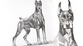 Drawing a Doberman dog with pencil.................................................................................................It took me:1 hour....................................................................................................MATERIALS:Pencil Prismacolor Col-erasePencil Faber Castell 7BStumpEraser.............................................................................................MUSIC:https://www.youtube.com/audiolibrary/music Ectoplasm de Audionautix está sujeta a una licencia de Creative Commons Attribution (https://creativecommons.org/licenses/by/4.0/)Artista: http://audionautix.com/ ............................................................................................Follow me:Youtube: https://www.youtube.com/user/MyDrawingTipsTwitter: https://twitter.com/MyDrawingTipsFacebook: https://www.facebook.com/MyDrawingTipsPinterest: http://www.pinterest.com/dashedtips/Blogger: http://miltoncor.blogspot.com/Deviantart: http://miltoncesar.deviantart.com/...............................................................................................Thanks for watching and please subscribe to my channel MyDrawingTips ChannelMilton Cor ©2014...............................................................................................