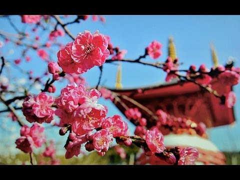 花の香りが絶えない寺 八浄寺