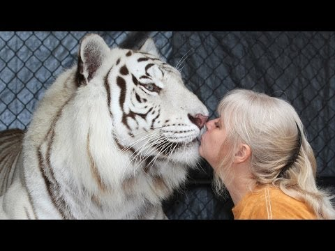 tiger - Florida Woman Keeps Bengal Tigers In Her Garden SUBSCRIBE: http://bit.ly/Oc61Hj While most people spend their golden years relaxing in their garden Janice Ha...