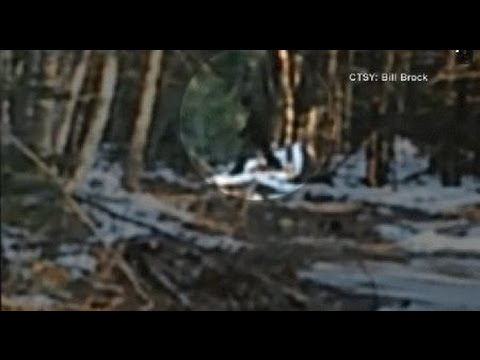 Bigfoot Sighting in Maine Caught on Tape