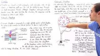 Prokaryotic vs Eukaryotic Flagella