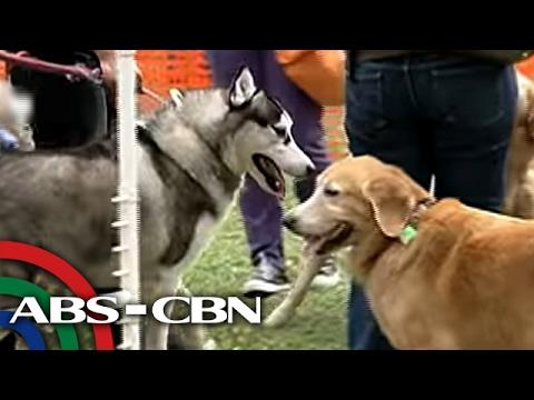 Bandila: Kaso ng animal cruelty, tumataas: PAWS
