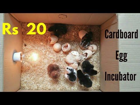 How To Make an Egg Incubator at Home    Cardboard Box Egg Incubator    Egg Hatched
