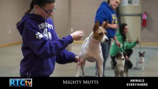 Animals Everywhere- Mighty Mutts