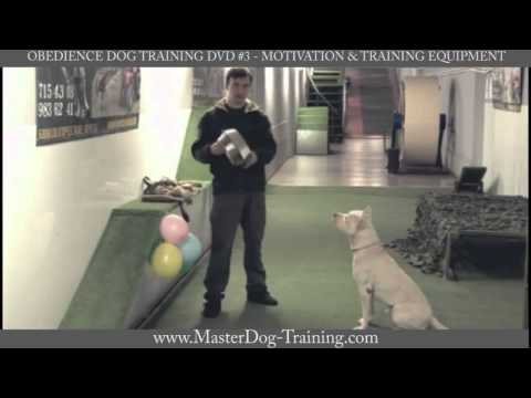 Obedience Dog Training DVD #3 – Motivation & Training Equipment