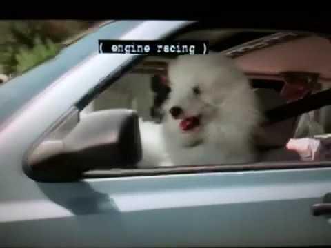 Bud Light: Dog Training