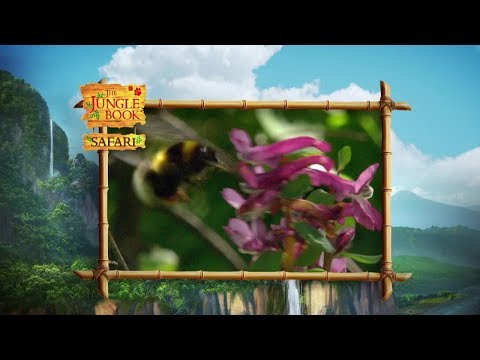 The Jungle Book Safari - Episode 3 - Insects