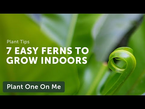 7 EASY FERNS to Grow Indoors — Ep. 190