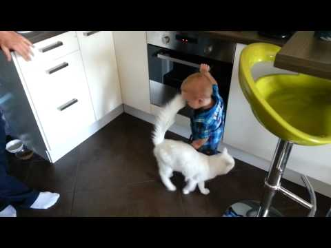 Cat Protects Little Boy From the Hot Stove