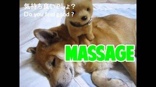 マッサージされ犬