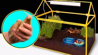 Como fazer uma casa para um caracol gigante