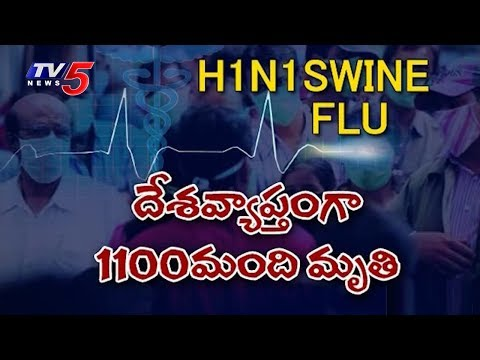 Swine Flu Terror | Deaths Due to Swine Flu
