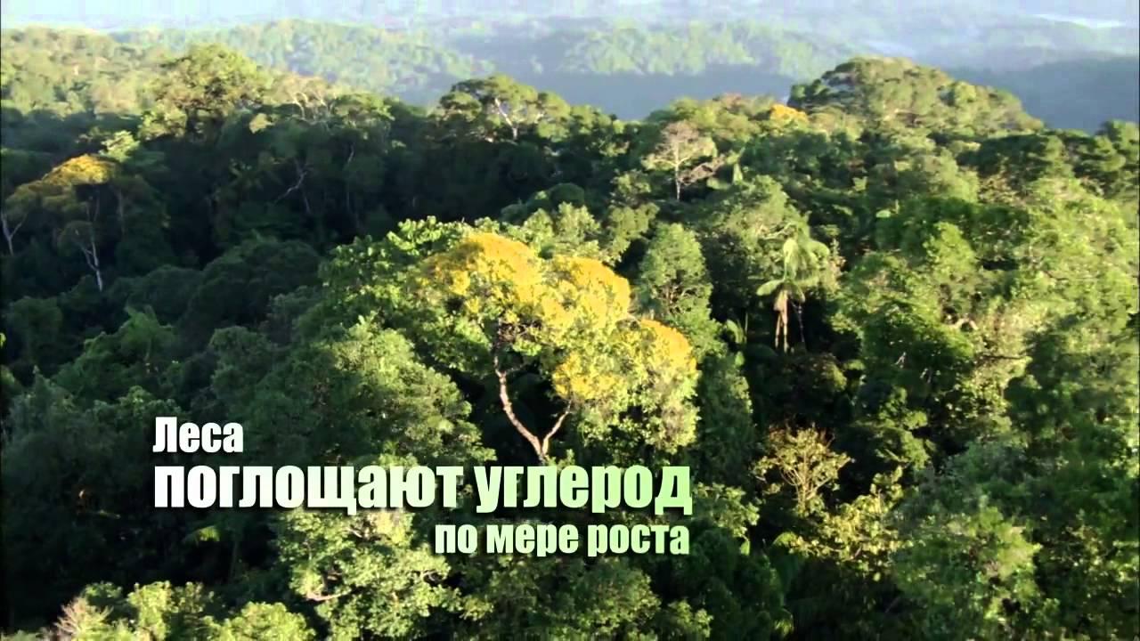 Международный день лесов – 21 марта