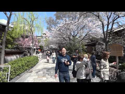 「[事故]てんかん発作容疑者が起こした京都・祇園ひき逃げ事故の衝突音が衝撃。」のイメージ
