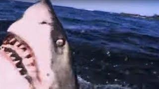 Video Great White Shark ATTACK   Predators   BBC Earth MP3, 3GP, MP4, WEBM, AVI, FLV Juni 2019