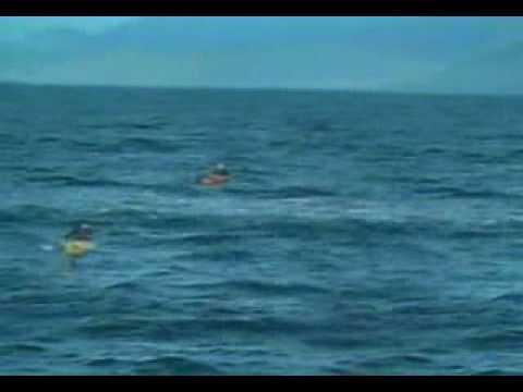 在海上玩獨木舟,竟然會被殺人鯨給壓到!?