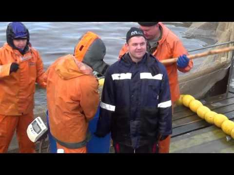 Видео отчет о поездке за форелью в Карелию от 20 ноября 2015