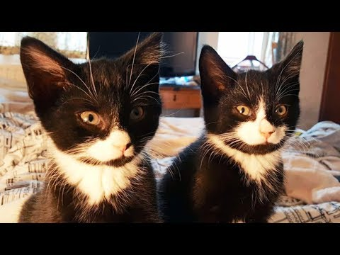 These Kitten Were Rescued, But A Few Days Later, The Rescuers Got A Surprising Call