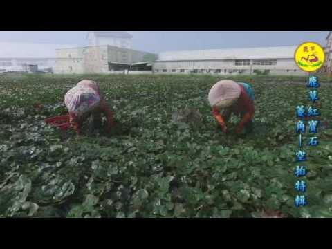 【空拍錦集】2016.11 鹿草紅寶石-活水菱角