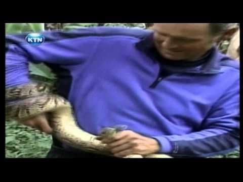 KTN Ajabu : Man fights off a python