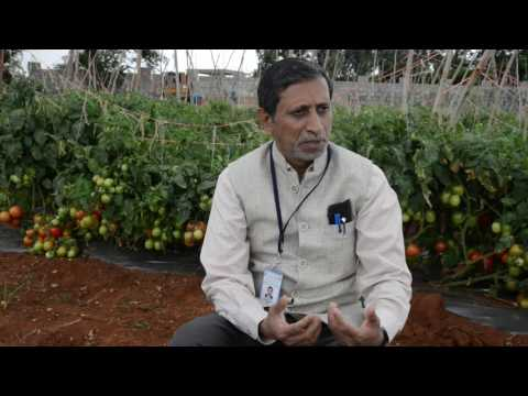 Interview by Dr.M.R.Dinesh, Director, ICAR-IIHR during Field day on Tomato F1 hybrid Arka Rakshak""