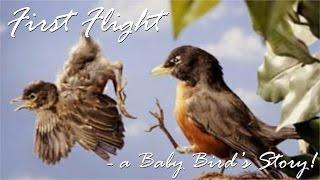 Download Lagu First Flight - a Baby Bird's Story! Mp3
