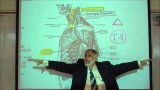 ANATOMY; MUSCLES OF THE SHOULDER&UPPER ARM By Professor Fink