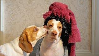 Kissing Dad: Cute Dogs Maymo&Penny #kissingdad
