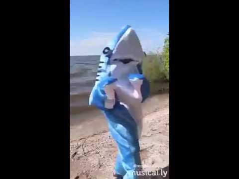 SHARK-IRA un Requin pas comme les autres