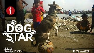 "Video I-Witness: ""Dog Star"", a documentary by Howie Severino (full episode) MP3, 3GP, MP4, WEBM, AVI, FLV Maret 2019"