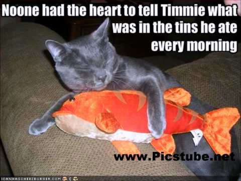 Funny Pictures Compilation - funny animals - picstube.net