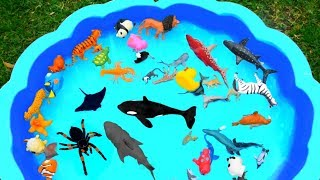 Video Learn Colors with Wild Animals in Blue Swimming Pool For Kids MP3, 3GP, MP4, WEBM, AVI, FLV Januari 2019