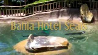 There are rescued seals in the ponds at the Bahia Hotel on Mission Bay in San Diego, California.