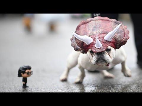 Halloween-Parade in New York nur für Hunde