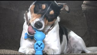 PlayBites from JW Pet are uniquely designed all natural, rubber, treat dispensing toys that come in different shapes. For full review...