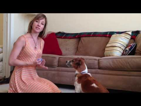 """Clicker Training: Touch"" by Raise the Woof Dog Training. Tips and Tricks!"