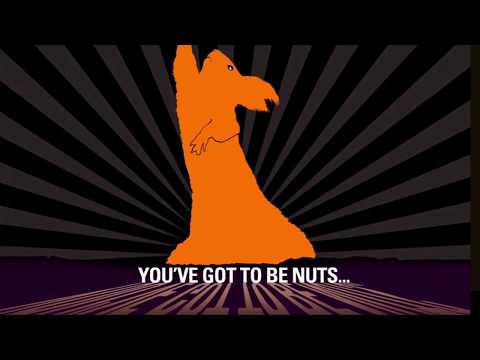The Squirrels - Dance Monkey Montage!