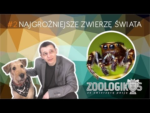 Więcej informacji http://zoocast.pl