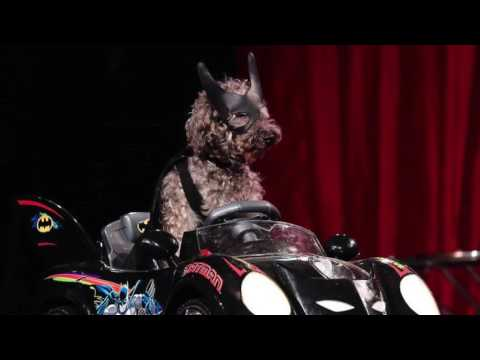 The Olate Dogs Variety Show