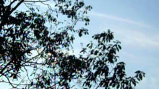 Mount Pocono (PA) United States  city pictures gallery : MY VIDEO CHEMTRAILS IN MY SKY TOP OF MT POCONOS PA USA AUG 22,2012 #3