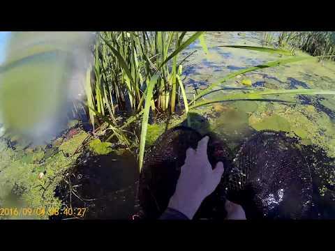 ловля на вершу на реке видео