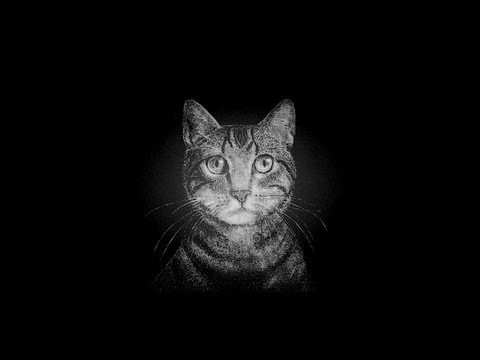 用鹽畫貓你看過嗎?