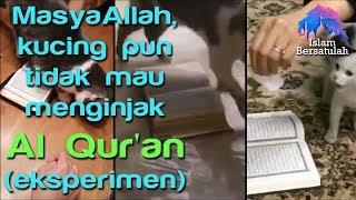 Nonton Masyaallah    Kucing Pun Tidak Mau Menginjak Al Qur An       Eksperimen  Film Subtitle Indonesia Streaming Movie Download