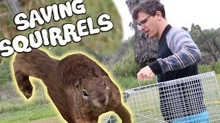 Video Trapping and Relocating Squirrels - An Examination MP3, 3GP, MP4, WEBM, AVI, FLV Februari 2019