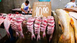 Video Amazon Street Food in Belém - UNBELIEVABLE TACACÁ + 13 Lady's Cooked Lunch at Market in Brazil! MP3, 3GP, MP4, WEBM, AVI, FLV Juli 2019