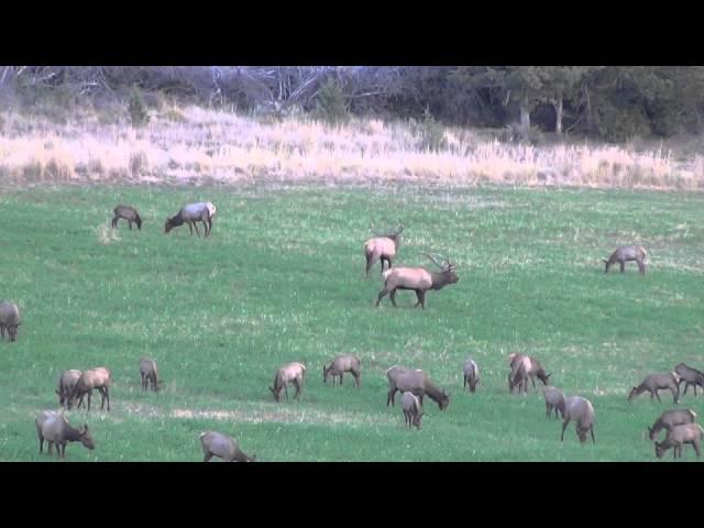 2014 Bull Elk - 2