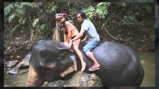 Ban Kwan Chang - The Best Elephant Trek In Koh Chang, Thailand
