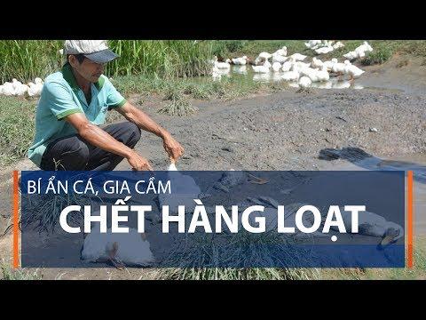 Bí ẩn cá, gia cầm chết hàng loạt | VTC1 - Thời lượng: 2 phút, 57 giây.